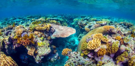 The (Almost) Late Barrier Reef