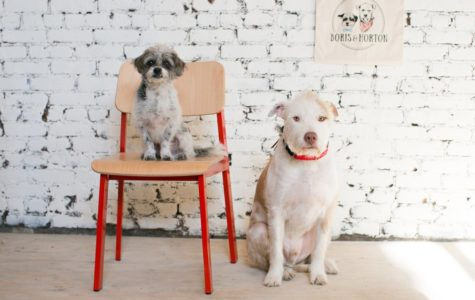 Be on the Lookout for 2018: New York's First Dog Cafe