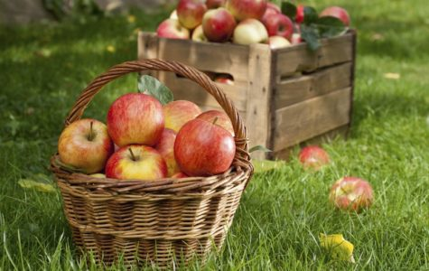 Crispy Fresh Apples Ready for Your Pick!
