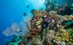Science Newsletter #5: The Great Barrier Reef and Plastics in the World's Oceans