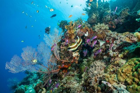 Science Newsletter #5: The Great Barrier Reef and Plastics in the World