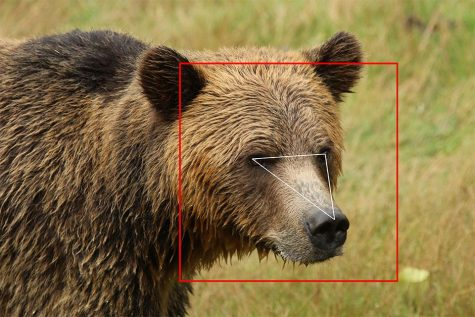 Facial Recognition Taking Its Next Big Step: To Animals